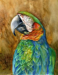 """Draw the Beauty of Nature with Mindy Lighthipe: Wildlife Art, Nature """"HYBRID MACAW"""" The Art of Nat..."""