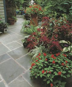 Container Plantings in the Shade Yield a Spectacular Garden: You don't need a lot of sun or even access to the soil to have a lovely garden. Read more here http://www.finegardening.com/how-to/articles/container-plantings-shade-yield-spectacular-garden.aspx