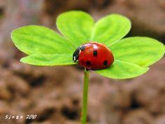ladybug - Ladybugs Photo (34832215) - Fanpop