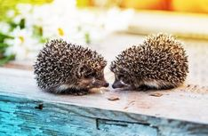 Hedgehog mother finger play for the fall - Baby Male And Female Animals, Finger Games, Kindergarten Games, Finger Plays, Halloween Quotes, Halloween Nails, Fall Baby, Animals And Pets, Wild Animals
