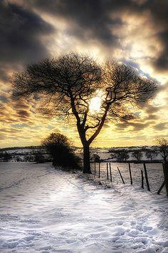 Ash tree (Skelmanthorpe, England) by Chris Charlesworth