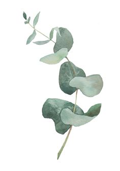 Eucalyptus on Behance inspo minimalist Eucalyptus Illustration Botanique, Plant Illustration, Watercolor Illustration, Watercolor Plants, Watercolor Leaves, Watercolor Paintings, Plant Painting, Plant Art, Leaf Art