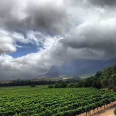 The Vrede en Lust vineyards - via by THE POINTS GUY- 20 minutes from la Clé - 4 luxurious villas in Franschhoek South Afrika, South African Wine, Great Shots, Wine Country, Continents, Vineyard, Beautiful Places, Places To Visit, Around The Worlds