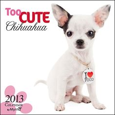Too Cute Chihuahua Wall Calendar: Inspired by her own adorable (and photogenic!) furry companions, photographer and animal lover Myrna Huijing has created this charming Studio Pets series.  http://www.calendars.com/Chihuahuas/Too-Cute-Chihuahua-2013-Wall-Calendar/prod201300005039/?categoryId=cat10126=cat10126#