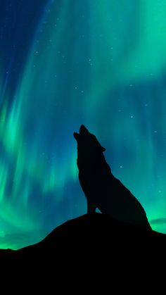 Wolf silhouette with the northern lights in the background. lights and blues Wolf Wallpaper, Animal Wallpaper, Wolf Background, Wolf Painting, Sillouette Painting, Wolf Silhouette, Wolf Artwork, Fantasy Wolf, Wolf Spirit Animal