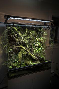 Gecko Vivarium, Gecko Terrarium, Reptile Terrarium, Terrarium Plants, Biotope Aquarium, Aquarium Fish Tank, Planted Aquarium, Les Reptiles, Reptile Room