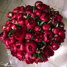 red charm peonies