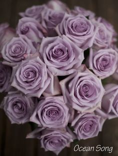 Ocean Song Rose, a lavender rose by http://www.harvestwholesale.com