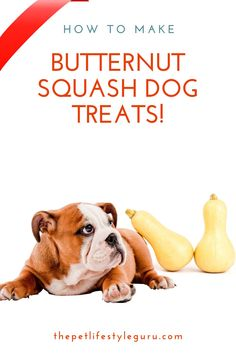 Want to learn how to save yourself a lot of money when it comes to dog treats? Don't buy them - make them yourself! Here's our simple butternut squash dog treat recipe made with items you readily have in your pantry! Don't have butternut squash - easy peasy - exchange it for pumpkin! #dogtreats #dogfood #dogtreatrecipe