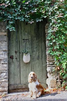 A Heart in Provence: olive sprigs