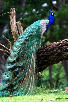 Majestic Bird by *Kaniala83 on deviantART