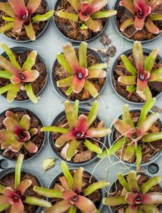 Propagating Epiphytic Plants: How To Propagate Epiphytic Plants
