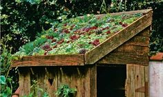 Drought tolerant, living roof. If my future home can't have a green roof, then I could absolutely have a shed or chicken coop with one! Photograph: Nicola Stocken Tomkins