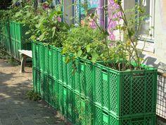 Gemüsekisten vor Graffitiwand 3
