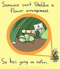Someone sent Sheldon a flower arrangement, so he's going on safari, text; Sheldon the Tiny Dinosaur