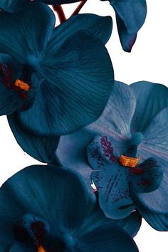 trendy ideas for nature beauty quotes flowers Flower Aesthetic, Blue Aesthetic, Blue Flowers, Beautiful Flowers, Blue Orchids, Flowers Nature, Flower Wallpaper, Iphone Wallpaper, Image Bleu