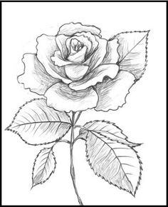 Rosa con  tallo y hoja                                                       …