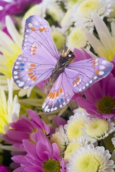Purple Butterfly with Yellow Flowers. Butterfly Kisses, Purple Butterfly, Butterfly Flowers, Beautiful Butterflies, Beautiful Birds, Animals Beautiful, Pretty Flowers, Flying Flowers, Butterfly Pictures