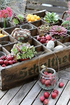 Succulents and found natural objects in an old partitioned crate. Love this look Sukkulenten und gef Succulents In Containers, Container Flowers, Cacti And Succulents, Planting Succulents, Planting Flowers, Garden Care, Diy Garden, Planter Garden, Garden Boxes
