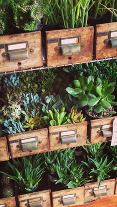 Succulents in Vintage Drawers - a thing of beauty!