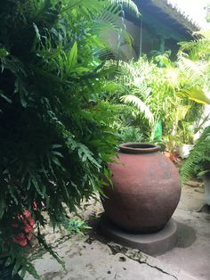 Plants, Santa Cruz, Planters, Plant, Planting