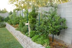 some great edible landscaping ideas