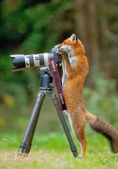 So währe es wen Tiere uns Fotografieren würden