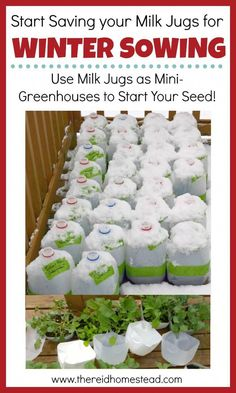 Sowing tutorial Sow your seeds in winter using milk jugs as mini greenhouses. Seed Starting 101 Series The Reid HomesteadWinter Sowing tutorial Sow your seeds in winter using milk jugs as mini greenhouses. Seed Starting 101 Series The Reid Homestead Winter Vegetables, Organic Vegetables, Growing Vegetables, Gardening Vegetables, Organic Nutrients, Organic Fruit, Growing Tomatoes, Growing Herbs, Diy Garden