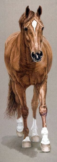 Horse Art - Portrait painting of Vivaldi - by artist Susan Van Wagoner | Art | Pinterest | Horse Art, Horses and Van