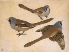 File:Pisanello, tre uccelli, cabinet des dessins.jpg