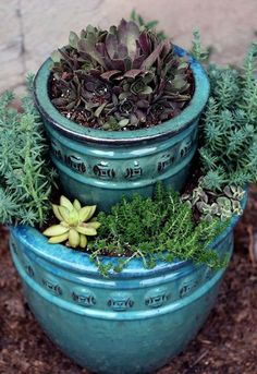 succulent planter how to, flowers, gardening, how to, succulents