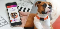 Nuzzle: The Smartest Pet Collar with No Fees | Indiegogo
