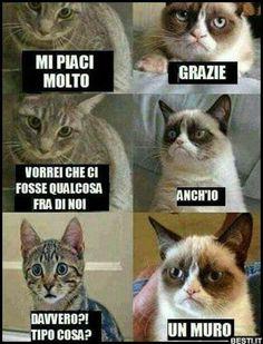 memes en espanol / memes ` memes hilarious can't stop laughing ` memes hilarious ` memes funny ` memes to send to the group chat ` memes divertidos ` memes about relationships ` memes en espanol Funny Grumpy Cat Memes, Funny Animal Jokes, Stupid Funny Memes, Funny Relatable Memes, Funny Cats, Funny Animals, Grumpy Kitty, Cool Memes, Hilarious Sayings