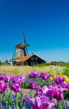 Windmills, Amsterdam   by eTips #TravelApps   http://www.etips.com/