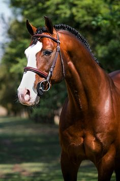 """Riley)""""this is my gorgeous 300 dollar world Grand Prix champion. I love him to death."""""""