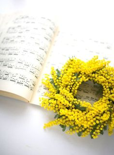 Mimosa Wreath: A pretty pop of yellow to mix up the holiday palette! Mimosas, Acacia Dealbata, Flower Power, Le Mimosa, Foto Art, Arte Floral, Shades Of Yellow, Mellow Yellow, Yellow Flowers