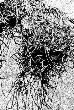 Patricia Mado  Nest - 2009