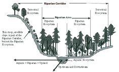 Schematic of Riparian Corridor