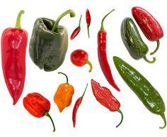 Paprikasorten mit Chili
