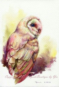 Barn Owl                                                                                                                                                                                 More