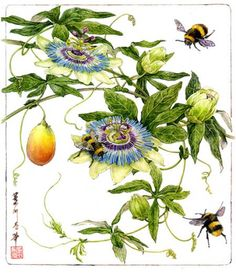 Contemporary Botanical Art | American Society of Botanical Artists Passion Flowers and Honey/Bumble Bees