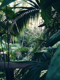 Tropical Garden, Tropical Plants, Tropical Forest, Tropical Paradise, The Wild Thornberrys, Jungle Vibes, Jungle Art, Plant Wallpaper, Amazon Rainforest
