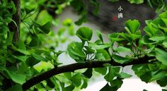 The traditional Chinese lunar calendar divides the year into 24 solar terms. Grain Buds, (Chinese: 小满), the 8th solar term of a year, begins on May 21 this year, and ends on June 5. It means that the seeds from the grain are becoming full but are not ripe. https://www.blogger.com/blogger.g?blogID=5250444873609848179#editor/target=post;postID=8365256794722306452