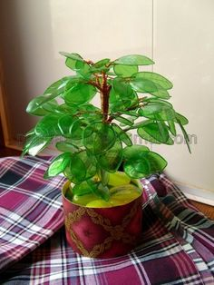 Bonsai from a plastic bottle