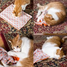 Learn how to make a mat or blanket for your pet. You can choose to fill it with catnip or just leave it as-is. Either way, your fur baby will love it! Homemade Cat Toys, Diy Cat Toys, Pet Toys, Cat Crafts, Animal Crafts, Cat Mat, Catnip Toys, Animal Projects, Diy Stuffed Animals