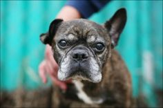 Senior Dogs have a lot of experience in a lot of things! Why not adopt one?