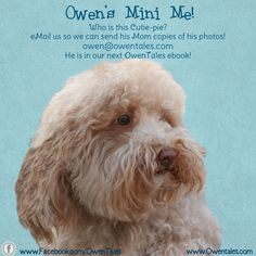 Owen's Mini Me!   Who is this adorable pup?  We lost your name!  email us so we can send you copies of his adorable photos!  owen@owentales.com Super Secret, Fb Page, My Fb, Mini Me, My Books, Pup, Fans, Lost, Photos