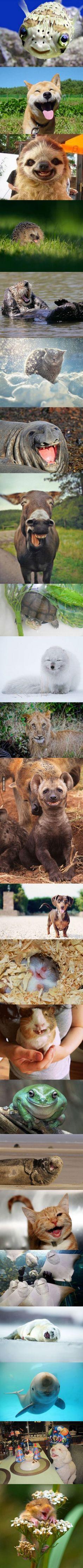 Los animales más felices del mkundo!
