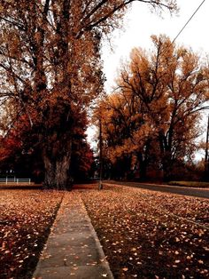 New Nature Phography Beautiful Autumn Leaves Ideas Autumn Cozy, Fall Winter, The River, Seasons Of The Year, Autumn Photography, Autumn Aesthetic Photography, Autumn Aesthetic Tumblr, All Nature, Fall Pictures