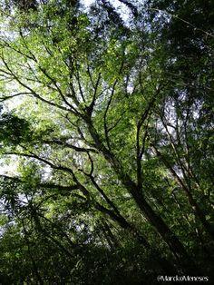 Santuario Bosque de Niebla (Xalapa - Coatepec).